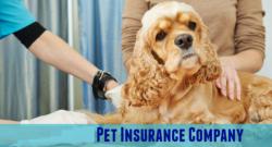 Pet's Health
