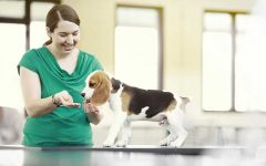 How Can You Ensure Special Care To Your Canine?