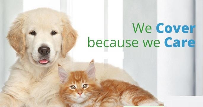 Pet's Health1